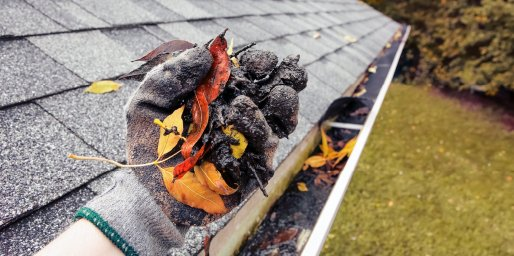 is roof cleaning necessary